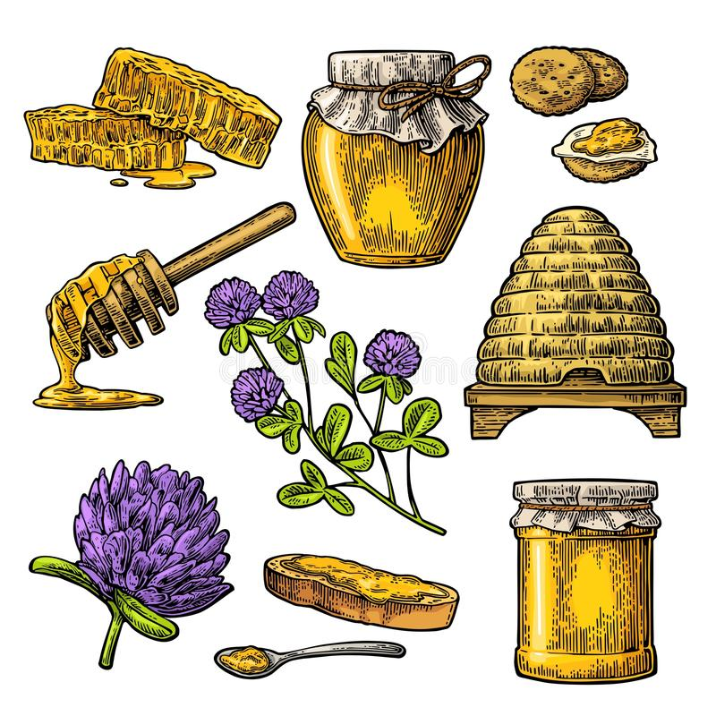 蜂蜜集合 瓶子蜂蜜,蜂,蜂房,三叶草,蜂窝 传染媒介葡萄酒被刻记的例证 向量例证