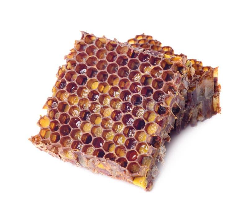 蜂面包粒子和蜂蜜细胞片断在白色背景被隔绝 对免疫改进的自然补救 Beekeep 库存图片