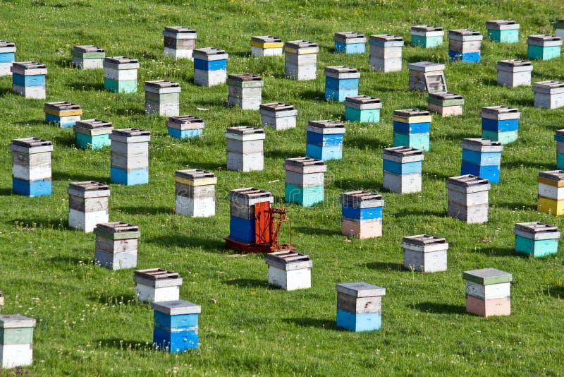 蜂项 库存照片