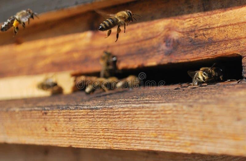 蜂飞行项 免版税图库摄影