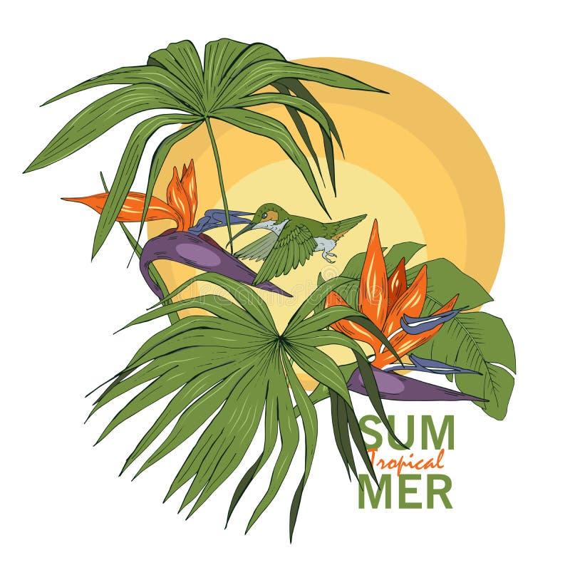 蜂鸟和热带植物和花 向量例证