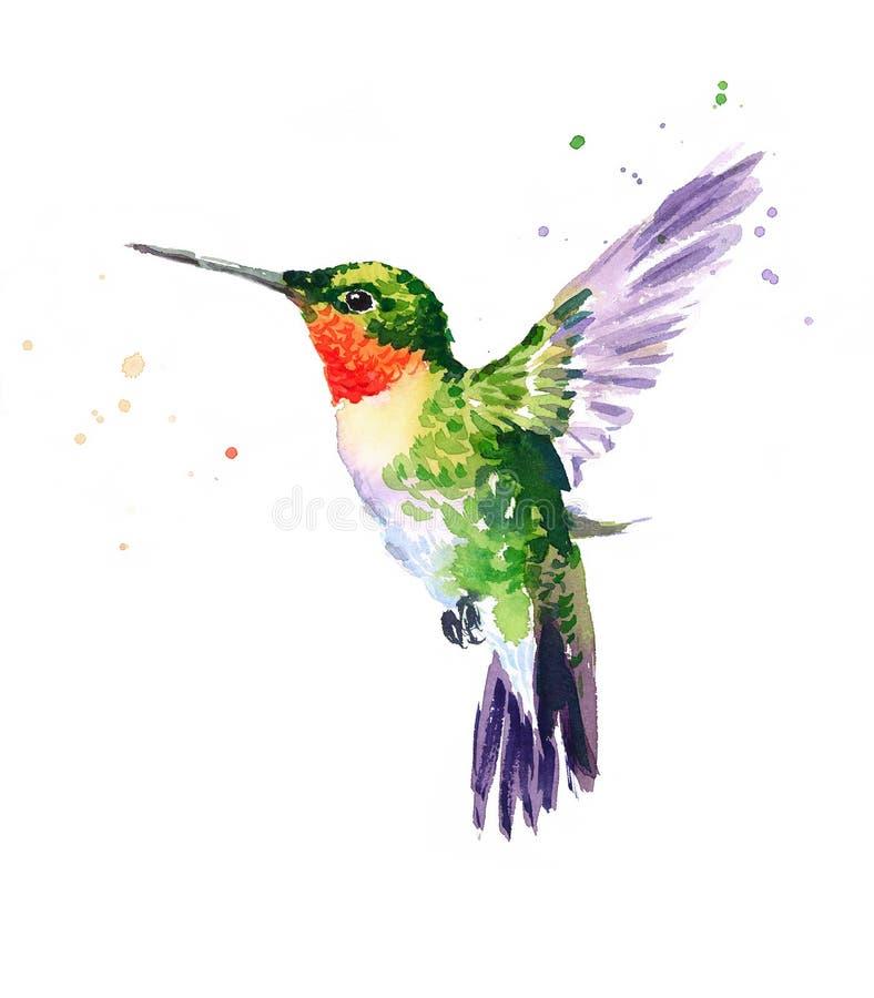 蜂鸟飞行水彩手拉鸟的例证 库存例证