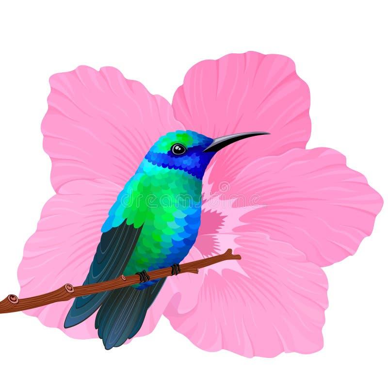蜂鸟 向量例证