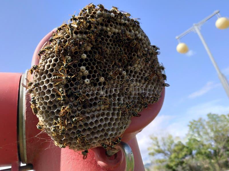 蜂,蜂蜜,蜂,蜂十字架盘区  免版税库存照片