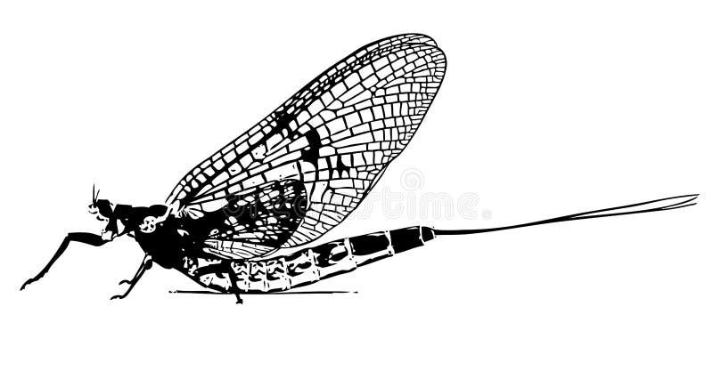 蜉蝣昆虫用假蝇钓鱼画象 向量例证