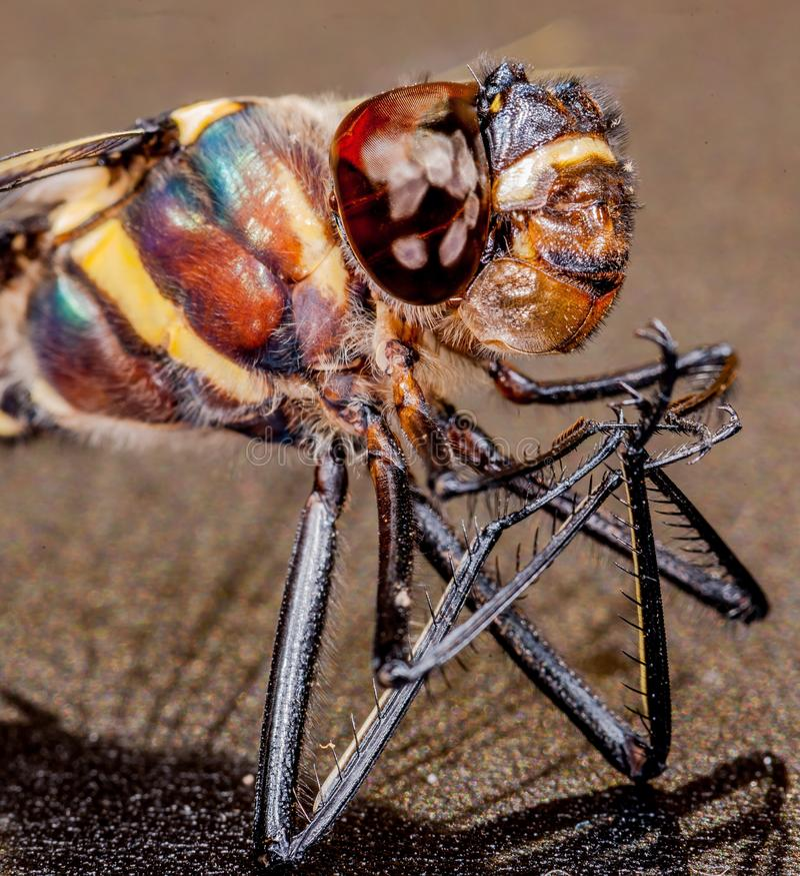 蜻蜓微小 图库摄影