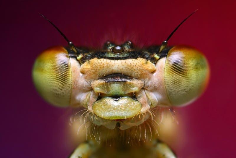 蜻蜓画象 免版税库存图片