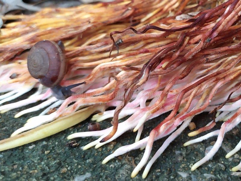 蜗牛和根 免版税库存照片