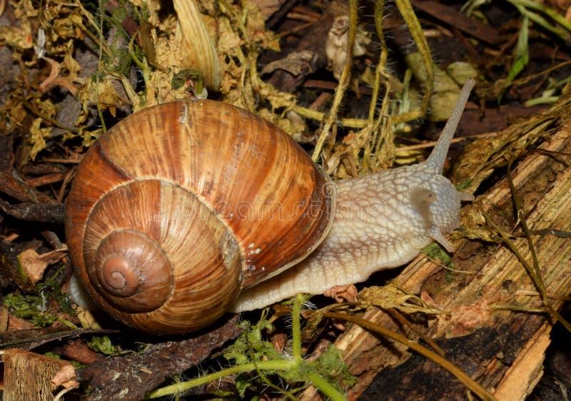 蜗牛在公园 库存照片
