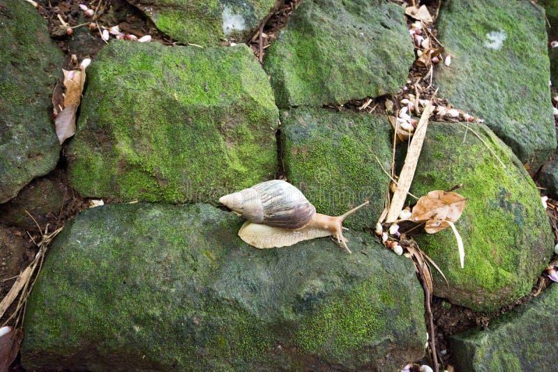 蜗牛在La Vanille自然公园毛里求斯 库存照片