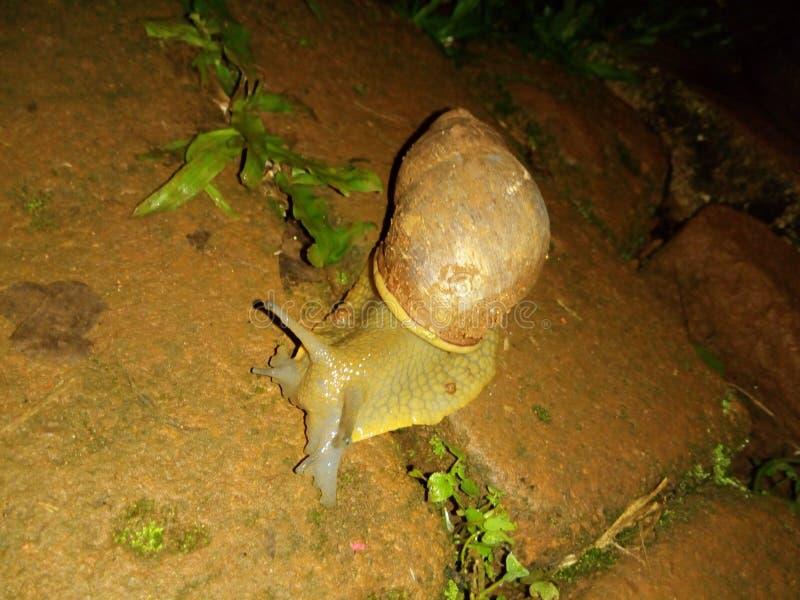 蜗牛在mi房子里 库存照片