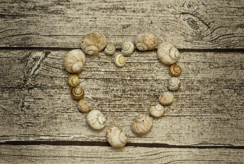 蜗牛壳心脏 免版税库存照片