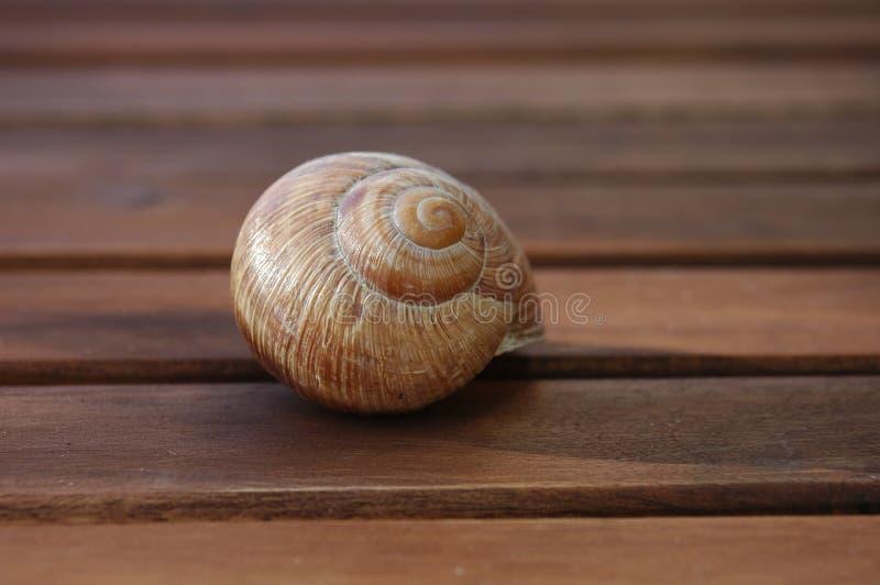 蜗牛壳, 免版税图库摄影