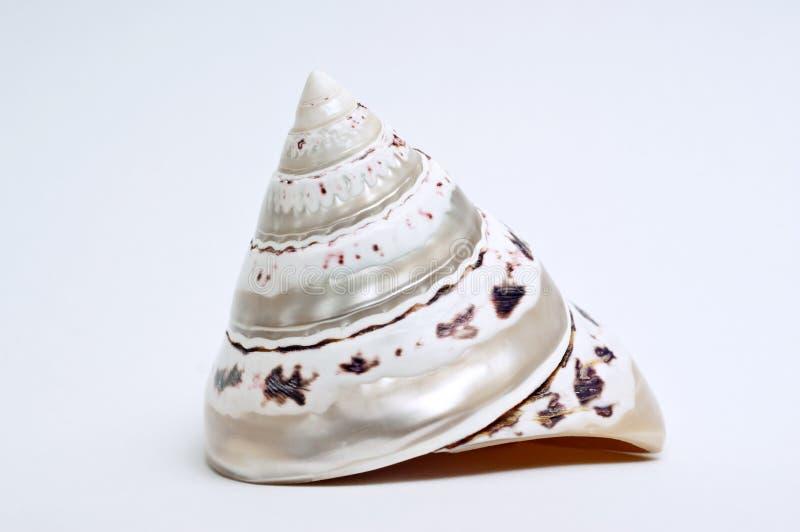 蜗牛壳 图库摄影