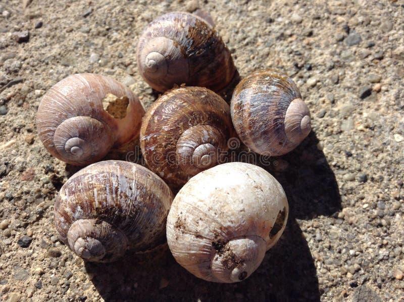 蜗牛壳 免版税图库摄影