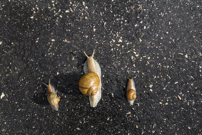 概念斋戒,蜗牛滑稽的动物奔跑v概念鳄鱼喷雾剂图片