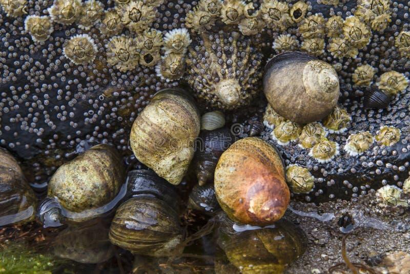 蜗牛岩石 库存图片