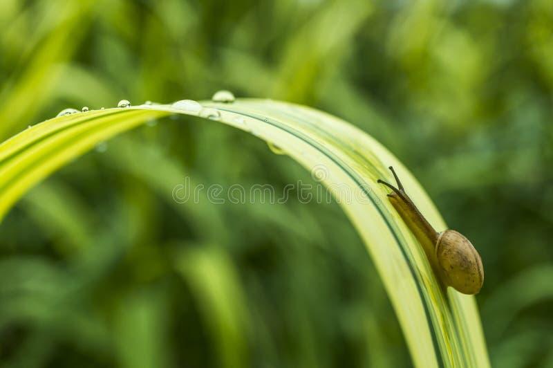 蜗牛攀登 图库摄影
