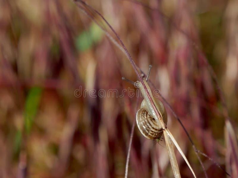 蜗牛方式的稀薄的紫色线 免版税库存照片