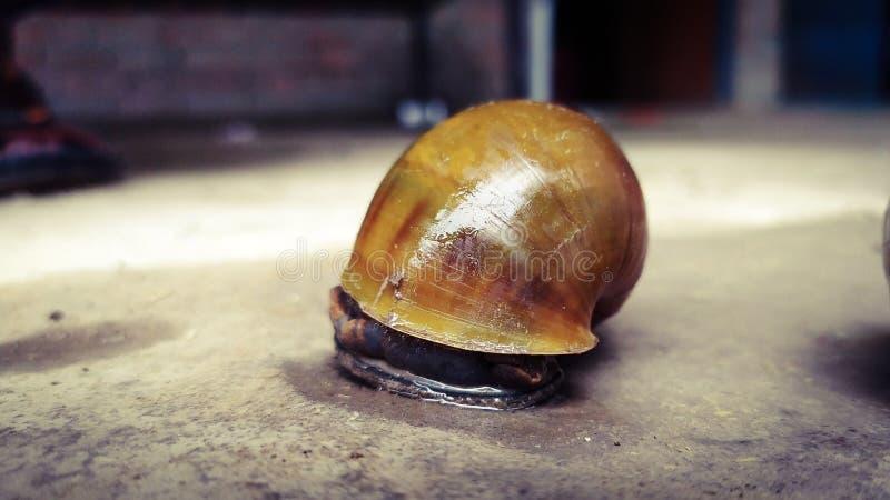 蜗牛爬行的hd墙纸 库存图片