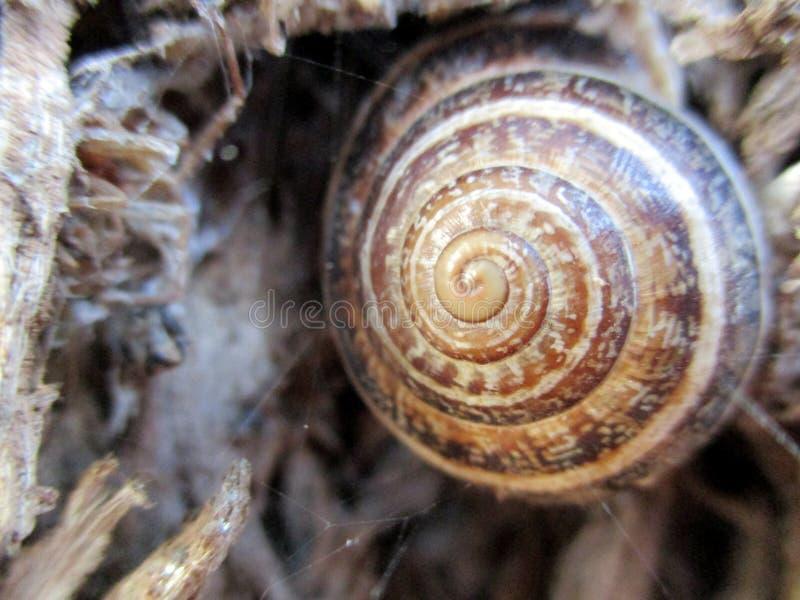 蜗牛特写镜头 免版税库存图片