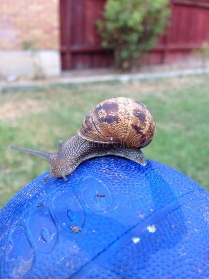 蜗牛生活 免版税库存照片