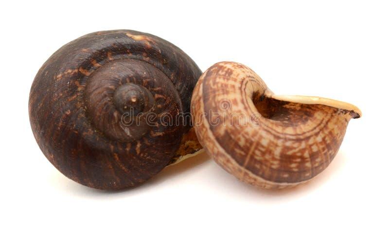 蜗牛的特写镜头 库存照片