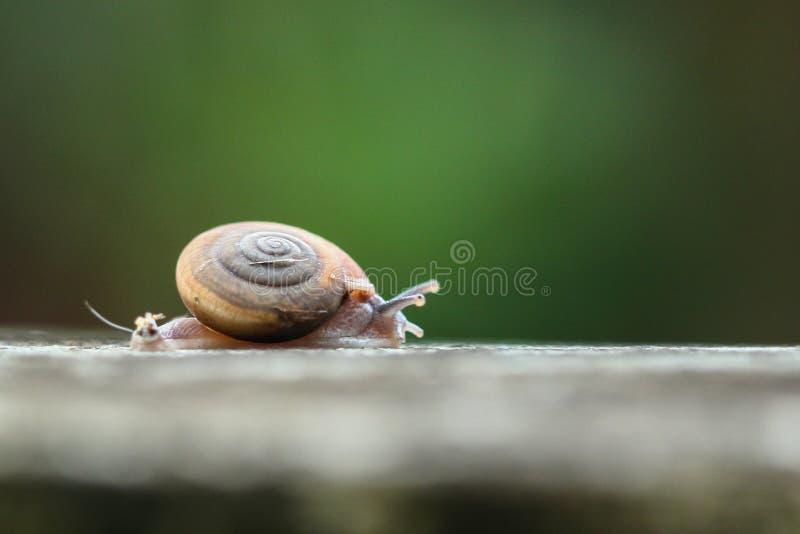 蜗牛走 免版税库存图片