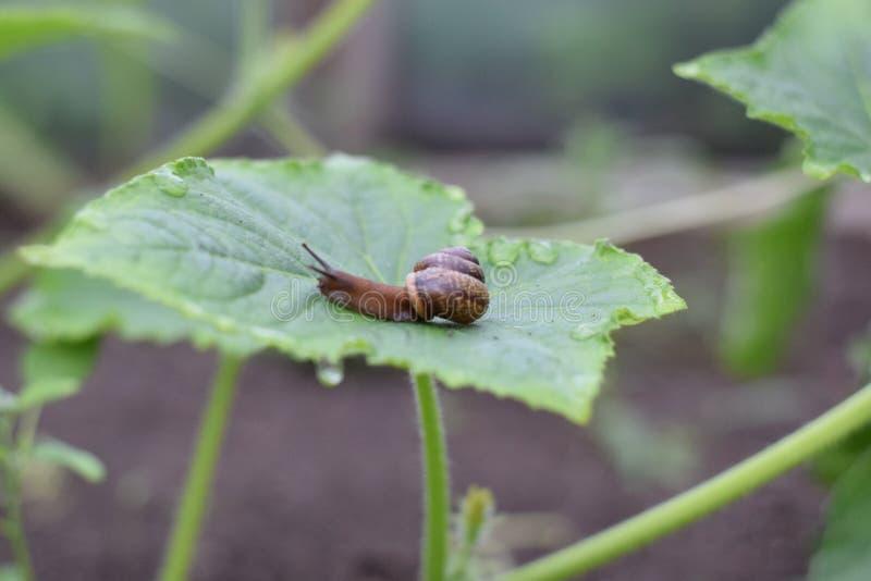 蜗牛速度 库存图片