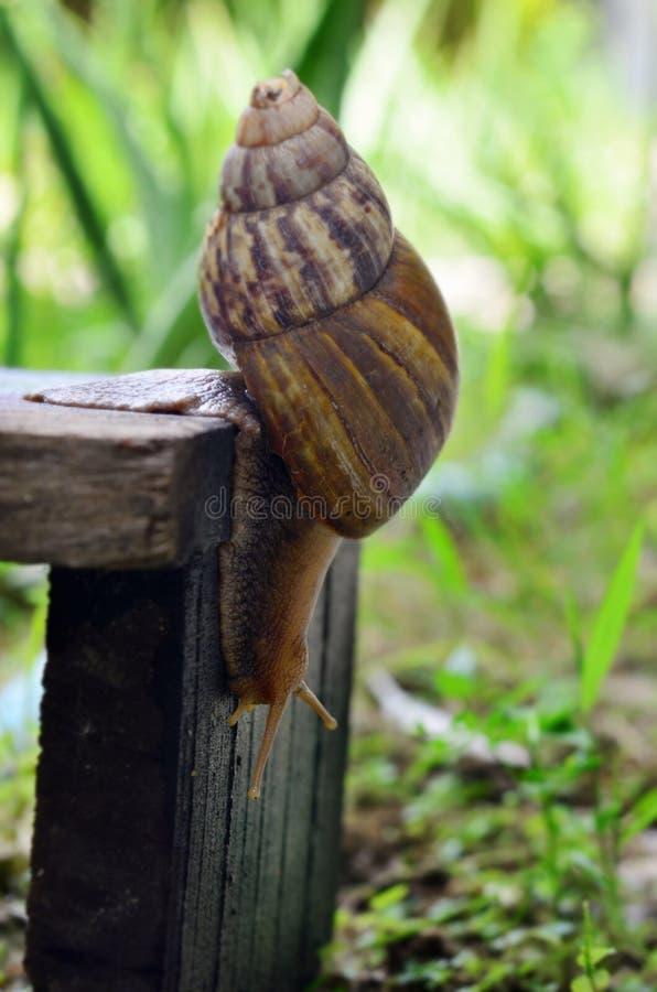 蜗牛滑在木板材(选择聚焦)的特写镜头视图 库存图片
