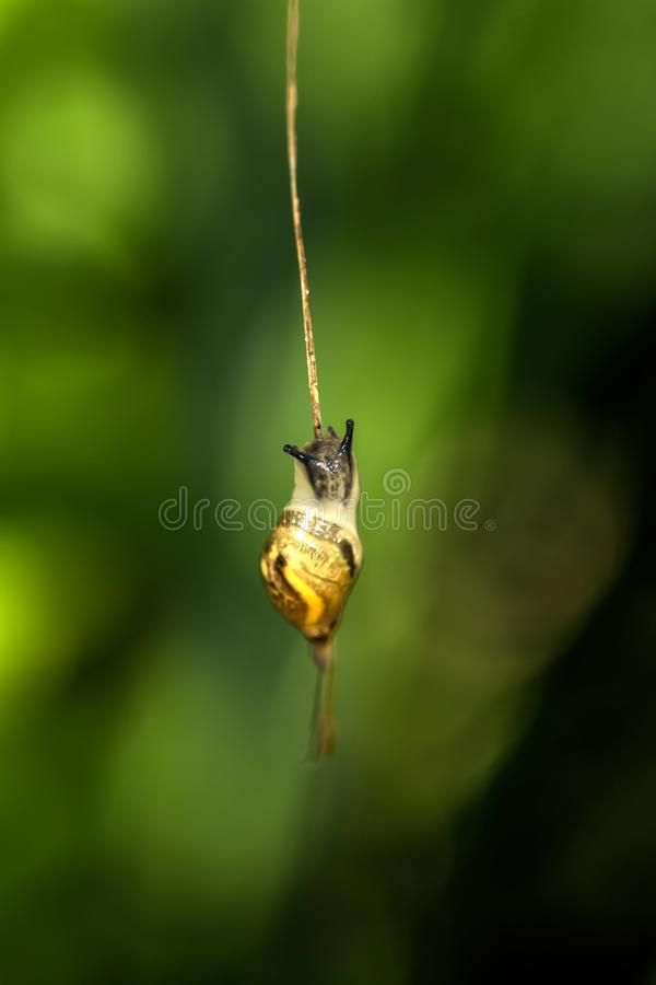 蜗牛 植物的叶子 免版税库存照片