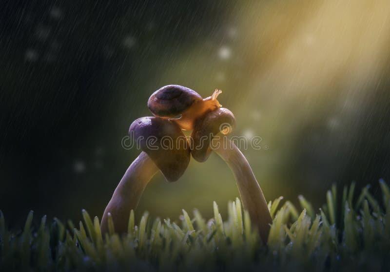 蜗牛n Musroom 免版税库存照片