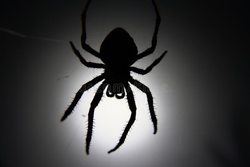 蜘蛛剪影 库存图片