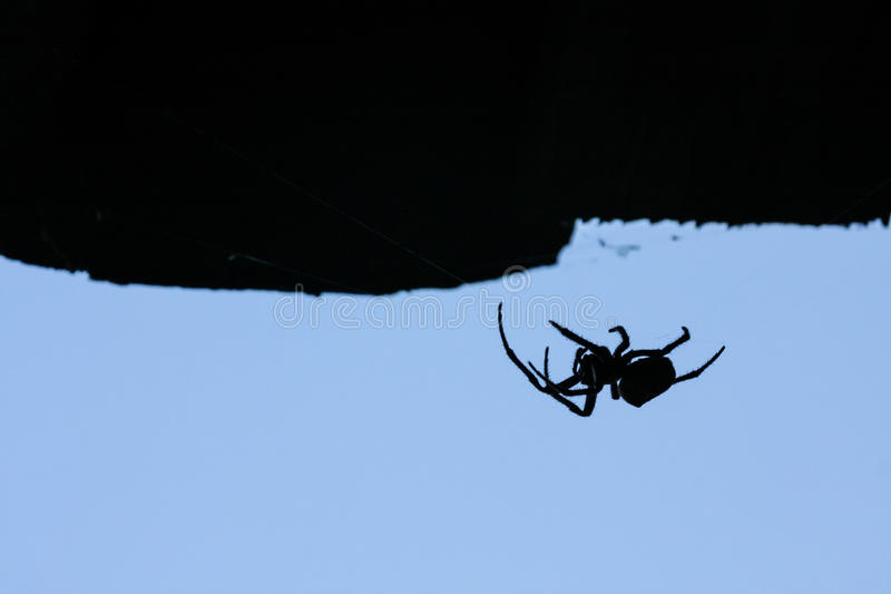 蜘蛛剪影 图库摄影