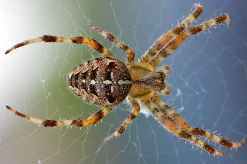 蜘蛛和他的蜘蛛网的宏指令 免版税库存图片