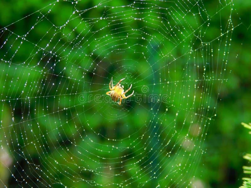 蜘蛛喜欢  库存图片