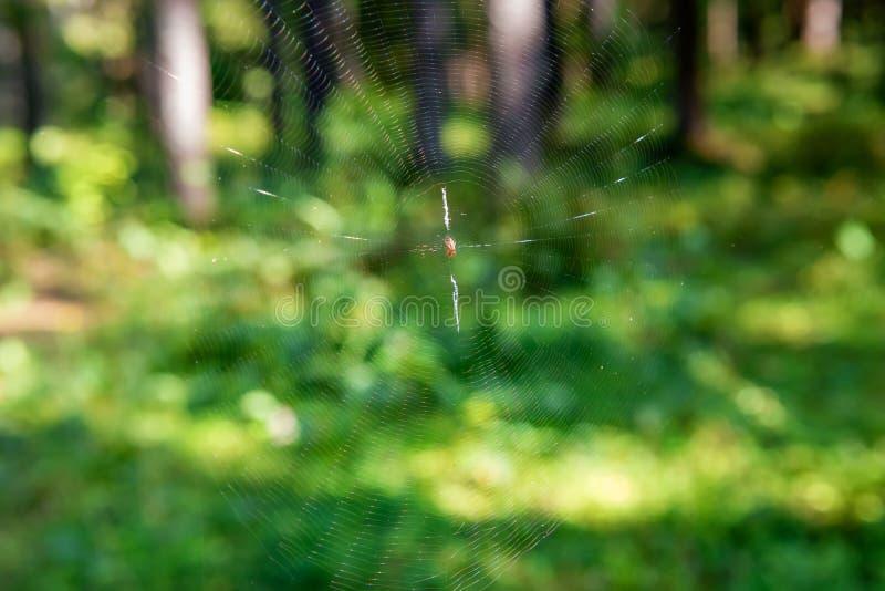 蜘蛛在它的网的中心坐 免版税库存照片