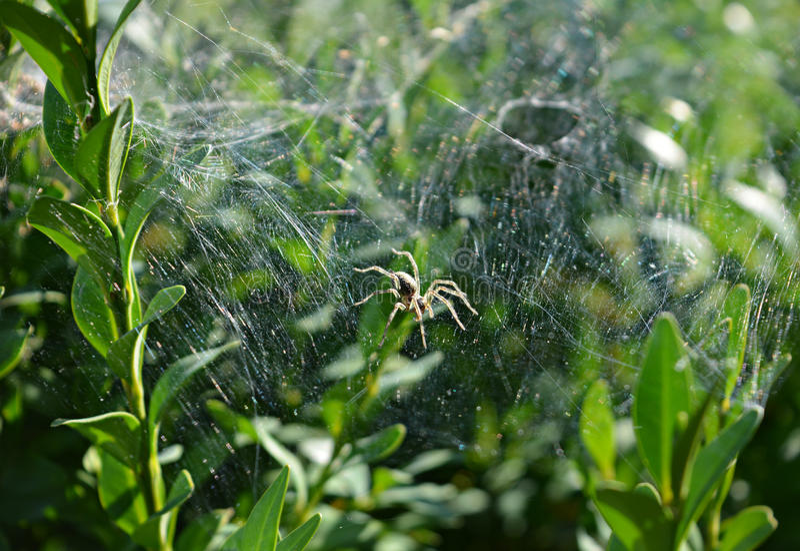 蜘蛛在森林里 免版税库存图片