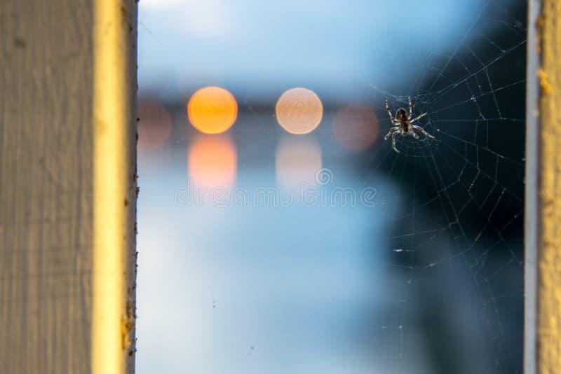 蜘蛛在Spidernet 免版税库存照片