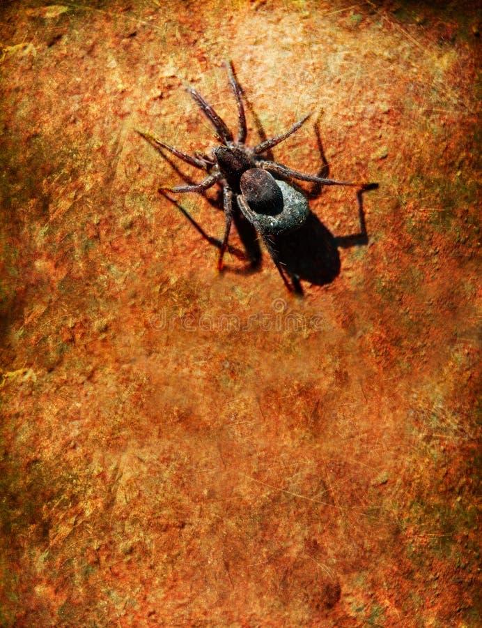 蜘蛛墙壁 免版税图库摄影