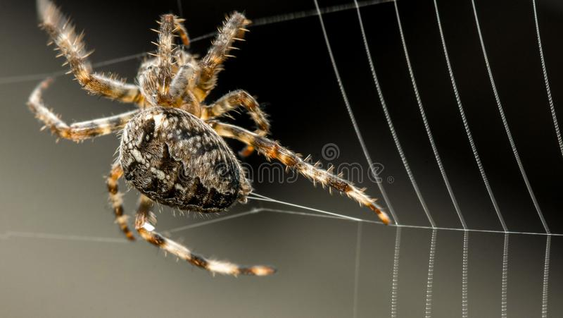 蜘蛛大厦网 库存图片