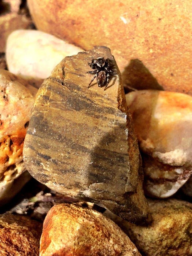 蜘蛛太阳烘烤 库存图片