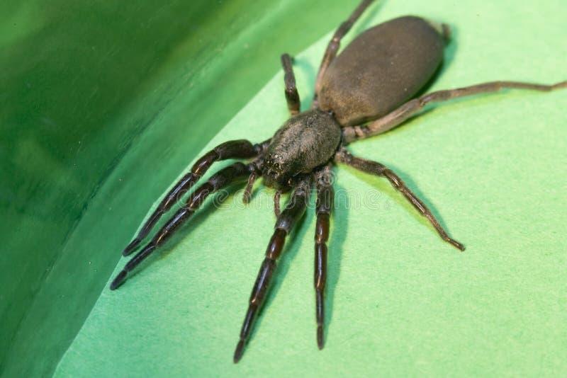 蜘蛛尾标白色 免版税库存照片