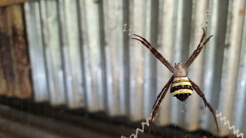 蜘蛛工作 免版税库存图片