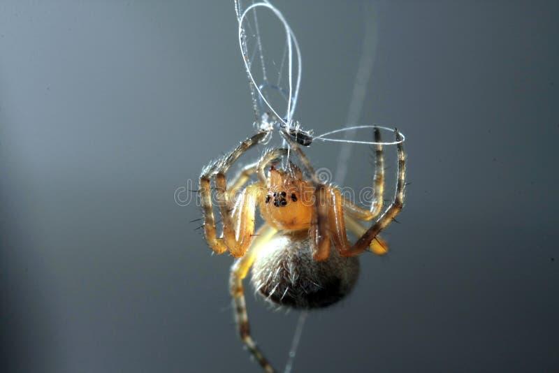 蜘蛛工作 免版税库存照片