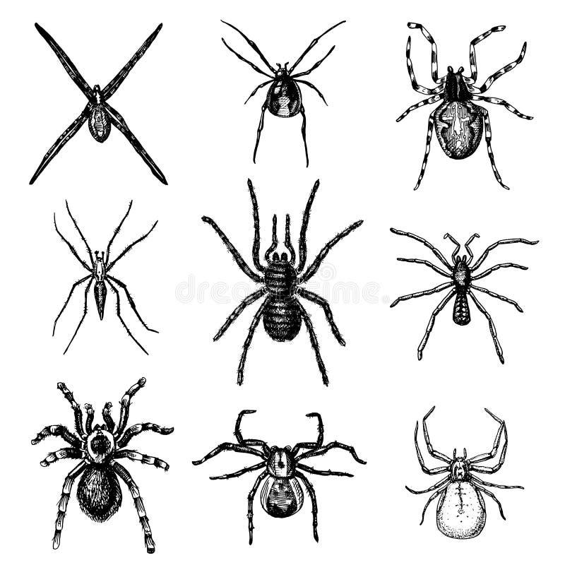 蜘蛛或蜘蛛纲的动物种类,多数危险昆虫在世界上 向量例证