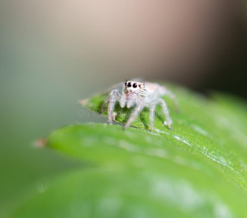 蜘蛛本质上 宏指令 库存照片