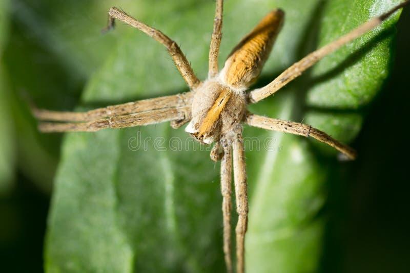 蜘蛛本质上 marco 免版税图库摄影