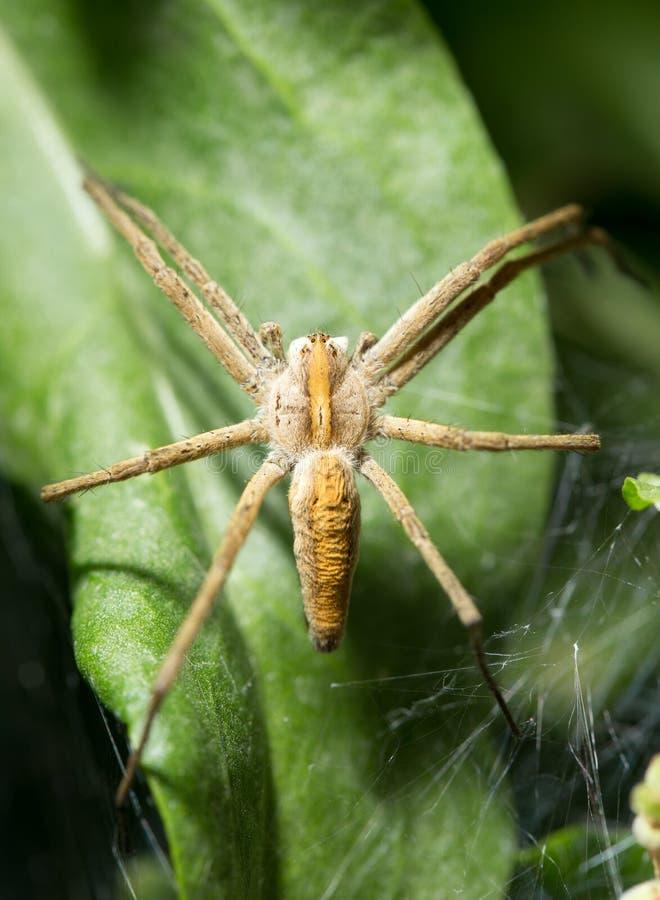 蜘蛛本质上 marco 图库摄影