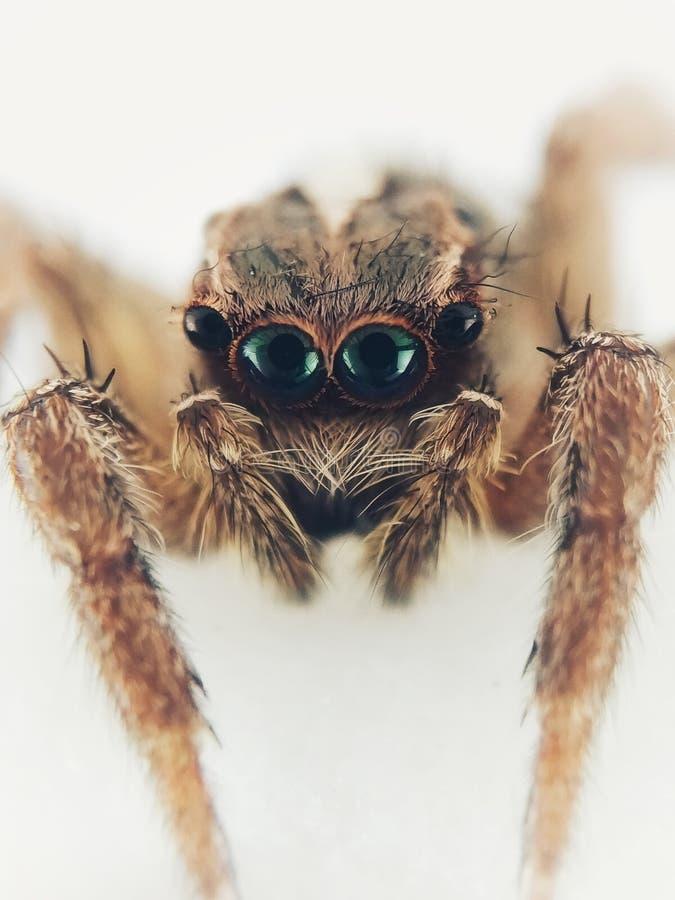蜘蛛的面孔 图库摄影